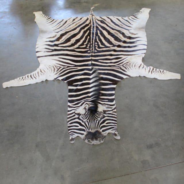 1505820224 Zebra1