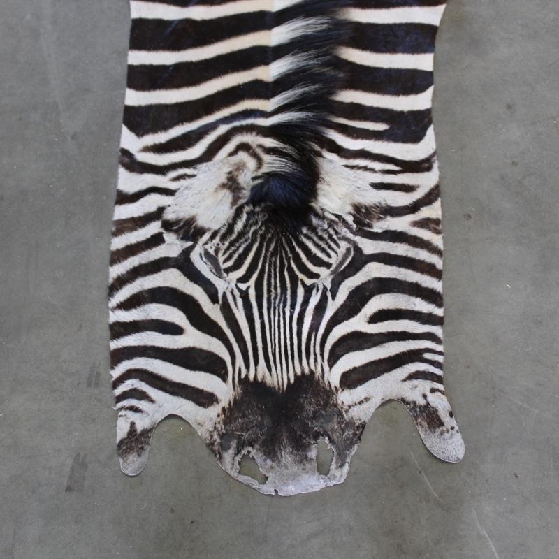1505820259 Zebra2