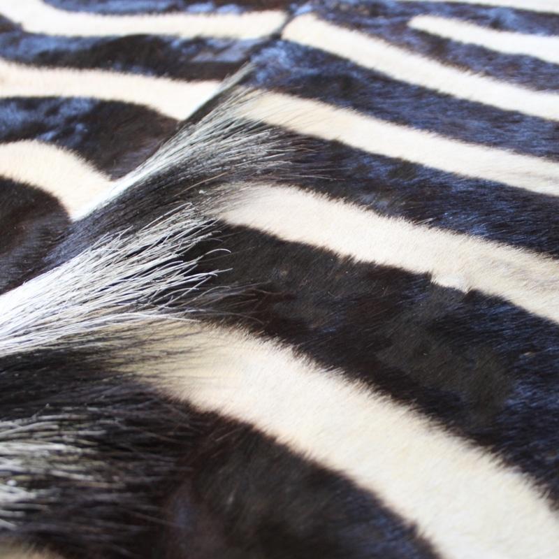 1505820260 Zebra
