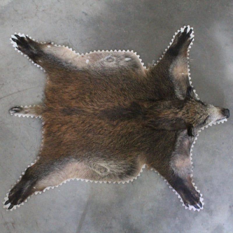 1514023294 Wild Zwijn