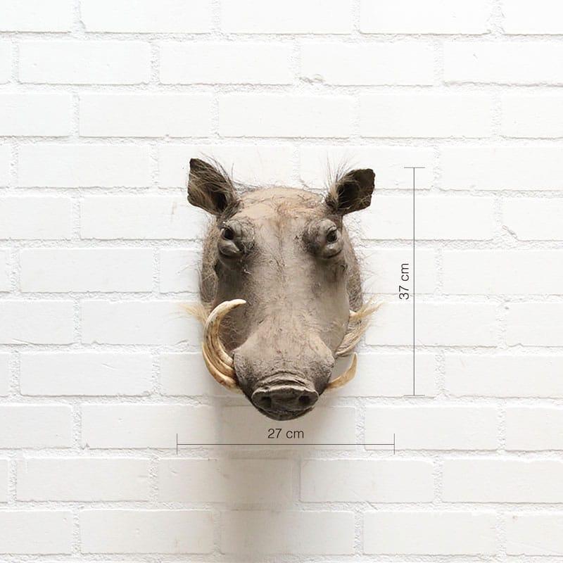 Wrattenzwijn Klaas
