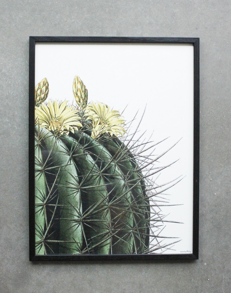 Vanillafly poster with illustrations of a round cactus with yellow flowers, including black frame