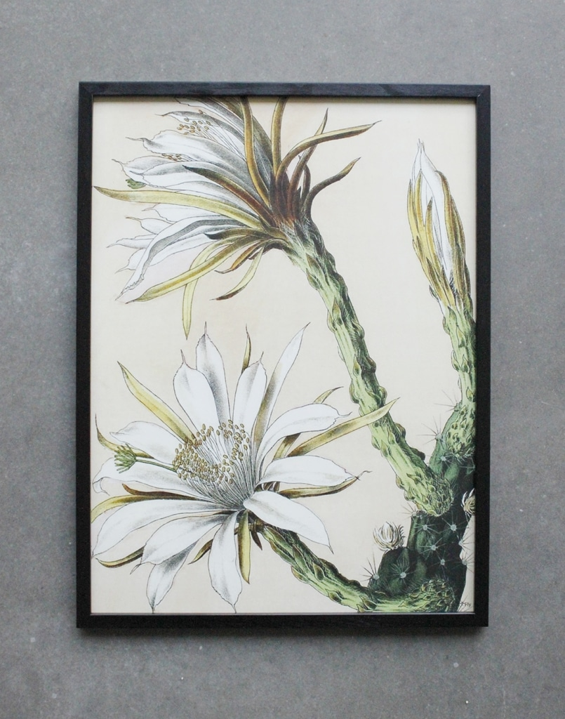 Vanilla fly poster with illustration of white cactus plant in large format with black frame