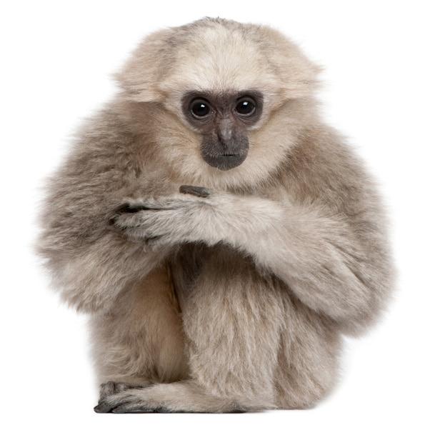Schilderij Smart Monkey