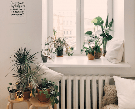 Herfst Trends Woonkamer Met Planten