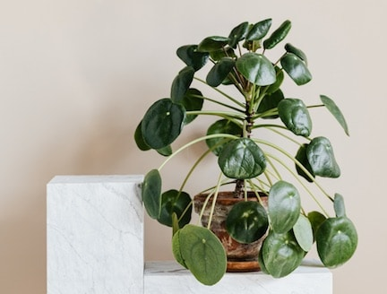 duurzaam wonen tips,duurzaam interieur tips,natuurlijk wonen,planten interieur,stairz traprenovatie