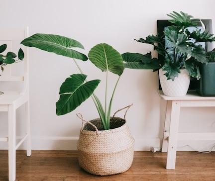interieurtrends voor 2021,woontrends 2021,groen in huis,interieur met planten,hippe planten